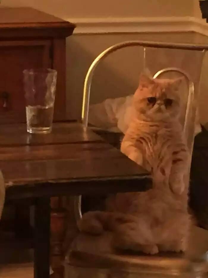 katinas1