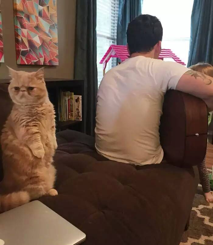 katinas3