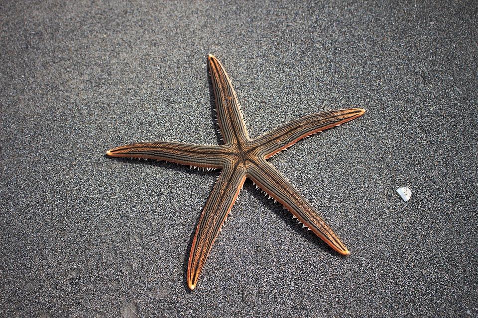 Sardinija ir žvaigždė ne iš jos paplūdimio