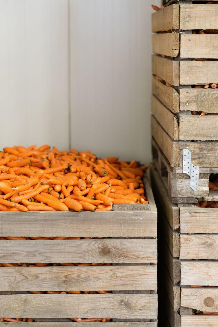 Ūkininko sėkmės receptas: 100 mln. morkų parduoti padeda patikima partnerystė