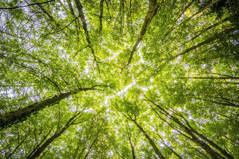 """Miško valdymo ir investavimo platforma """"Foros"""" pritraukė 1 200 000 eurų ir toliau plečia komandą"""
